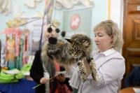 Выставка кошек в Туле, Фото: 50