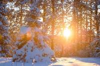 Снежное Поленово, Фото: 71