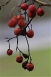 Осень, Фото: 37