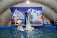 Дельфинарий в Туле, Фото: 4