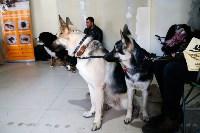 Выставка собак в Туле, Фото: 39