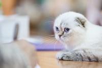 В Туле прошла выставка «Пряничные кошки» , Фото: 99