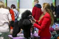 Выставка собак в Туле 14.04.19, Фото: 14