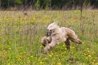 В Туле состоялись собачьи бега, Фото: 16