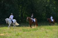 В Ясной поляне стартовал турнир по конному спорту, Фото: 59
