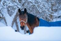 Снежное Поленово, Фото: 77