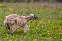 В Туле состоялись собачьи бега, Фото: 9