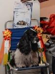 """Выставки собак в ДК """"Косогорец"""", Фото: 69"""
