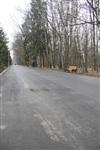 Ремонтные работы в ЦПКиО им. Белоусова, Фото: 2