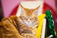 """Выставка """"Пряничные кошки"""". 15-16 августа 2015 года., Фото: 8"""