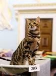 Выставка кошек, Фото: 6