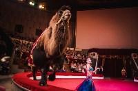 «Шоу Слонов» в Тульском цирке, Фото: 13