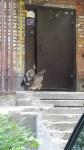Нападение орла на подъезд, Фото: 1