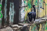 Тульские котики, Фото: 67