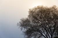 Центральный парк, утро, осень, Фото: 1