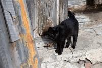 Тульские котики, Фото: 35