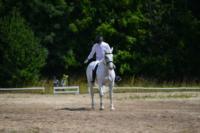 В Ясной поляне стартовал турнир по конному спорту, Фото: 124