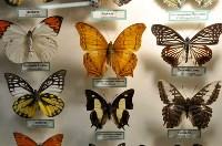 Экспозиция тропических насекомых в Тульском экзотариуме, Фото: 5