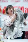 """Выставка """"Пряничные кошки"""" в ТРЦ """"Макси"""", Фото: 44"""