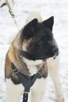 Праздник северных собак на Куликовом поле , Фото: 57