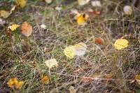 Золотая осень в Тульской области, Фото: 46