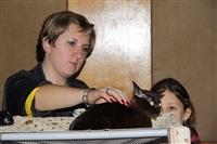 В Туле прошла международная выставка кошек, Фото: 37