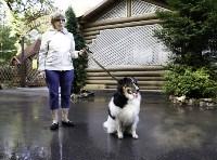 Рейд по выгулу собак в Центральном парке, Фото: 14