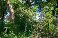 В Баташевском саду из-за непогоды упали вековые деревья, Фото: 10