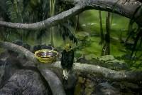 Тульский экзотариум: животные, Фото: 25