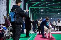 Выставка собак в Туле, Фото: 33
