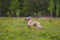 В Туле состоялись собачьи бега, Фото: 13