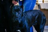 Выставка собак в Туле, Фото: 60
