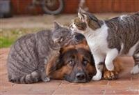 Дружба животных, Фото: 7