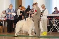 Выставка собак в Туле, 29.11.2015, Фото: 36