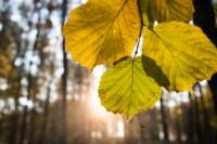 Центральный парк, утро, осень, Фото: 23