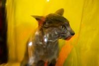 Пряничные кошки, Фото: 7