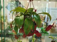Укротитель хищных растений Сергей Куницын, Фото: 17
