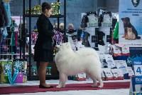 Выставка собак в Туле, Фото: 103