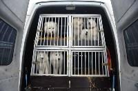 Праздник северных собак на Куликовом поле , Фото: 30