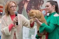 Выставка кошек в Туле, Фото: 46