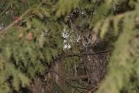 В Привокзальном районе поселились ушастые совы, Фото: 2
