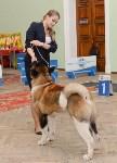 """Выставки собак в ДК """"Косогорец"""", Фото: 24"""