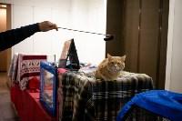 Пряничные кошки, Фото: 54