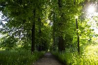 Летний день в Ясной Поляне, Фото: 3