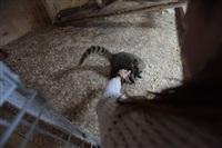 трогательный зоопарк, Фото: 31