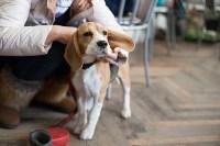 Выставка собак в Туле, 29.11.2015, Фото: 31