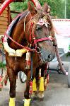Куда свозить детей посмотреть на животных в 100 км от Тулы: обзор, Фото: 1