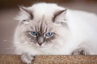 """Выставка """"Пряничные кошки"""". 15-16 августа 2015 года., Фото: 46"""