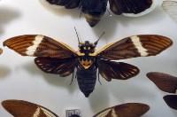 Экспозиция тропических насекомых в Тульском экзотариуме, Фото: 4