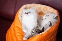 """Выставка """"Пряничные кошки"""". 15-16 августа 2015 года., Фото: 56"""